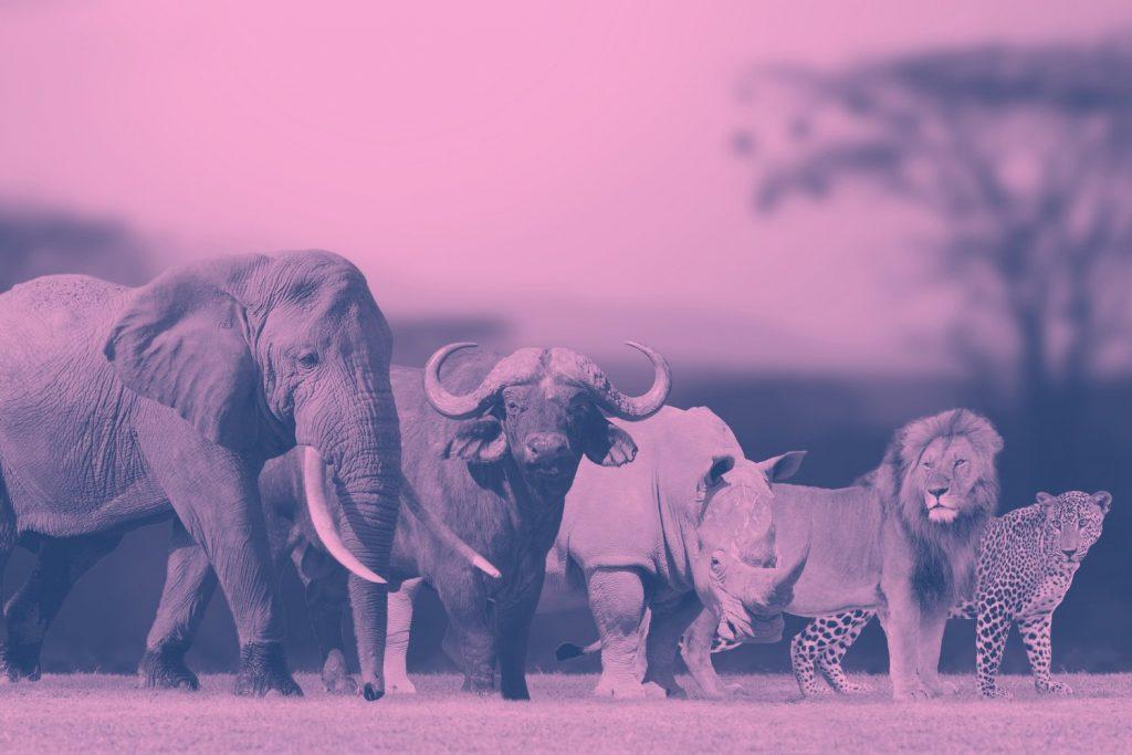 Workshops | Duik mee in de Big Five for Life Life Safari